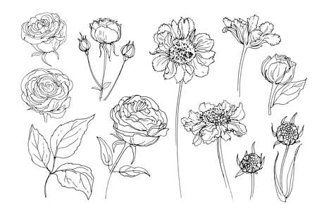 Flowers line drawn on a white background. Vector sketch of flowers. Roses