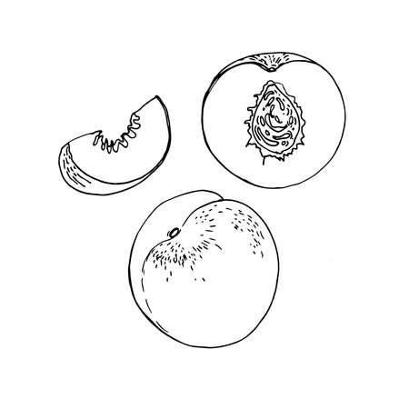 Nectarine fruit Vector drawing of food.