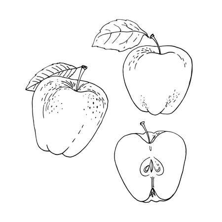 Apple fruit Vector drawing of food. 矢量图像