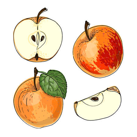 Apple red and orange. Vector food icons of fruits. Colored sketch of food products.