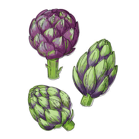 Artichoke. Vector food icons of vegetables. Colored sketch of food products.