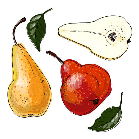 Pear Vector food icons of fruits. Colored sketch of food products. Pear red bartlett