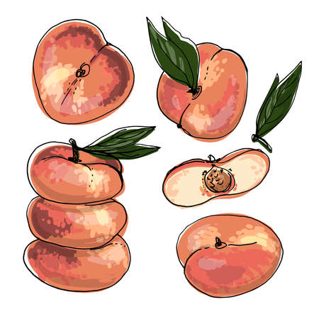 Flat peach Vector food icons of fruits. Colored sketch of food products. Saturn peach 矢量图像