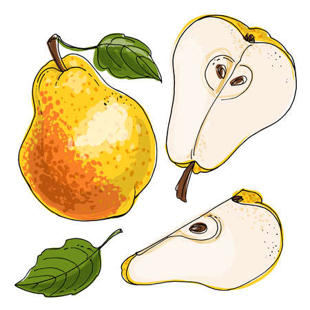 Pear Vector food icons of fruits. Colored sketch of food products. Red bartlett 矢量图像
