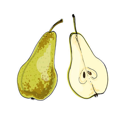 Pear Vector food icons of fruits. Colored sketch of food products. Pear Conference