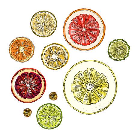 Pattern with citrus fruits orange. Vector food sketch. Exotic food drawings color 矢量图像