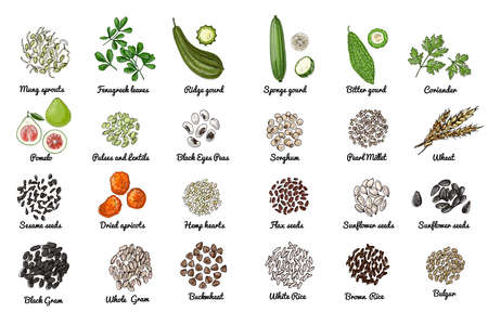Vector food icons. Colored sketch of food products. Spices, nuts, herbs, beans, cereals.