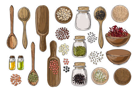 Vector food icons. Colored sketch of food products. Spices, nuts, herbs, beans, cereals, oil, spice jars, wooden spoons.