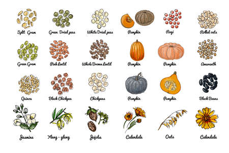 Vector food icons. Colored sketch of food products. Spices, nuts, herbs, beans, pumpkin, cereals. 矢量图像