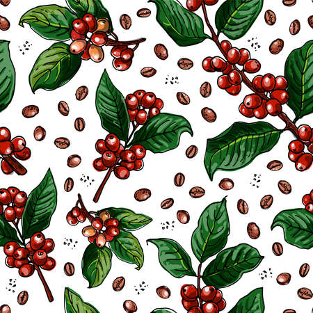 Seamless pattern vector color food. Branch of coffee, berries.
