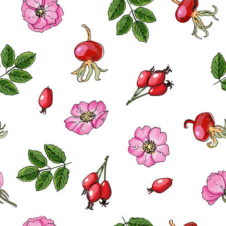 Seamless pattern vector color food. Rosehip, Hawthorn.