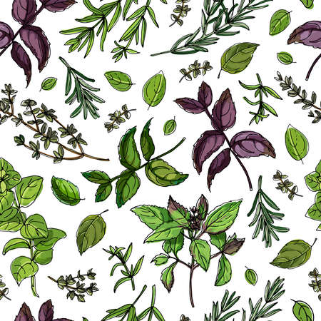 Seamless pattern vector color food. Basil, Parsley, Rosemary, Sage, Bay, Thyme, Oregano, Mint