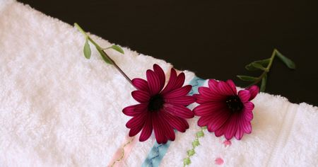 face cloth: Two maroon daisies on a white face cloth Stock Photo