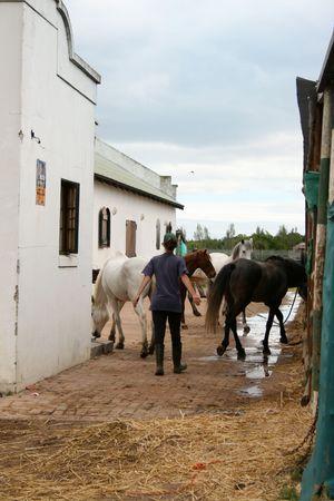 馬の野生を実行した後、馬小屋に戻ってくる 写真素材