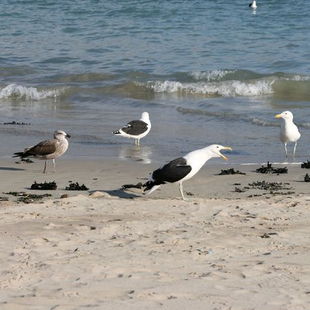 ebb: Seagulls standing on the beach, one calling out