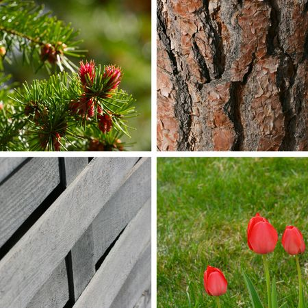 Variety of spring garden backgrounds and textures photo