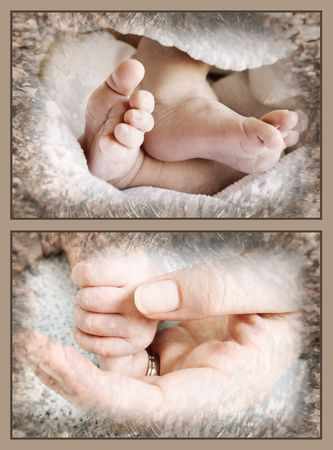 Collection of baby feet and hands held by mother photo