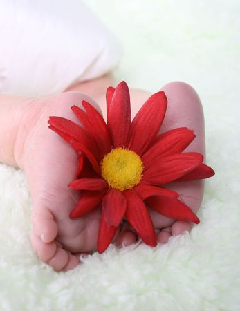 cherishing: Feet of a newborn baby with a red flower