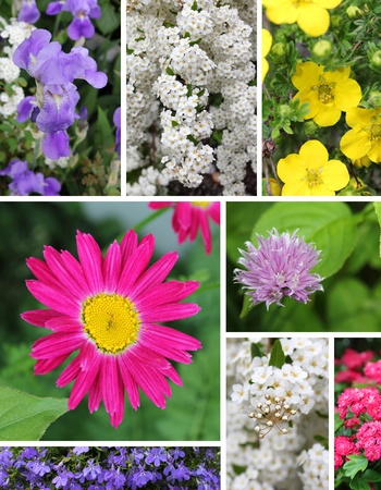 Combination image showing different spring flowers in bloom photo