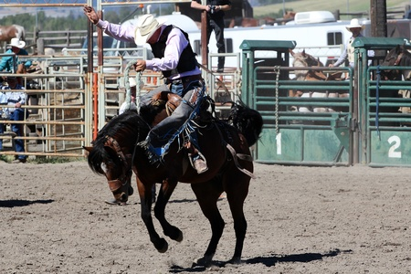 bucking horse: MERRITT, B.C. CANADA - SEPTEMBER 3: Cowboy during saddle bronc event at The 52nd Annual Pro Rodeo September 3, 2011 in Merritt British Columbia, Canada