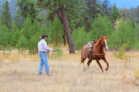 Young cowboy training his horse in the meadows photo