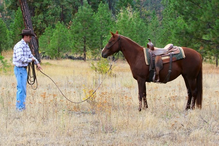 cowboy on horse: Cowboy working his horse in the field Stock Photo
