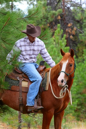 Cowboy working his horse in the field Stock Photo