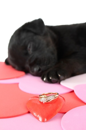 red heeler: Cute black puppy with red ceramic heart Stock Photo