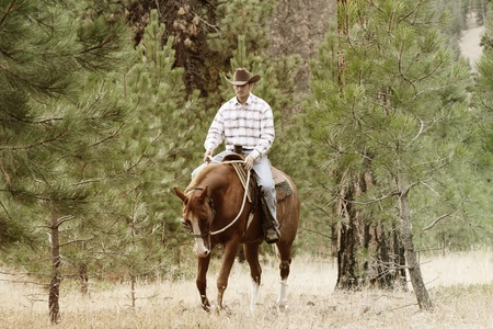 western saddle: Young cowboy riding his horse in the field