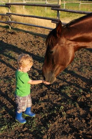 Mooie kleine blonde jongen voeden van een paard wat lekkers Stockfoto