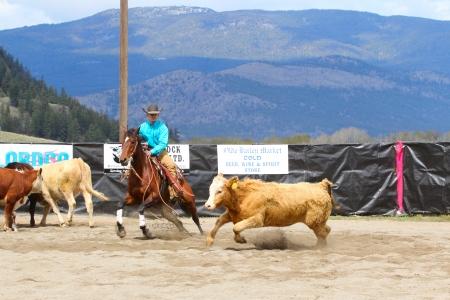cutting horse: MERRITT, B.C. CANADA - MAY 5: Cowboy during the cutting horse event at The Merritt Cutting Horse Show May 5, 2012 in Merritt British Columbia, Canada