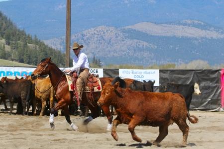 MERRITT, B.C. CANADA - MAY 5: Cowgirl during the cutting horse event at The Merritt Cutting Horse Show May 5, 2012 in Merritt British Columbia, Canada