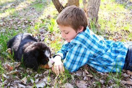 Young boy with his Bernese Mountain Dog puppy photo
