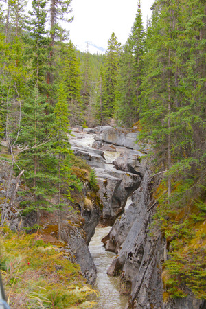 amongst: Rock formation with a stream carving amongst trees