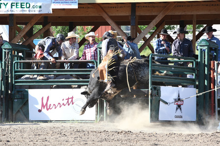 riding helmet: MERRITT, B.C. CANADA - May 30, 2015: Bull rider riding in the first round of The 3rd Annual Ty Pozzobon Invitational PBR Event.