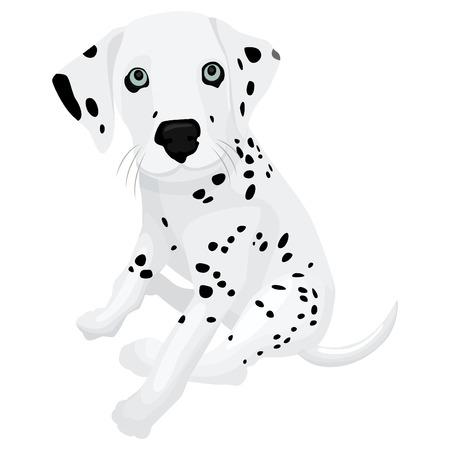 dalmatian puppy: Cute dalmatian puppy plush toy