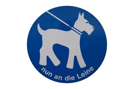 dog on leash: con s�lo correa de perro