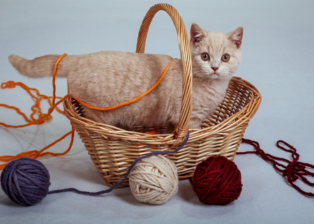 kitten in the basket with the balls of the threads photo