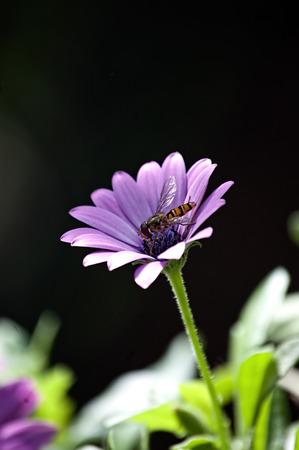 purple flower: Purple flower with bee in the garden