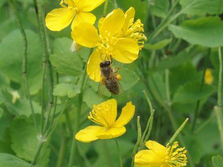 yelow: Wild Yelow Flower