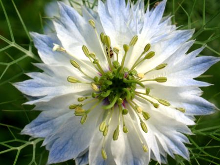 Blue and White flower photo