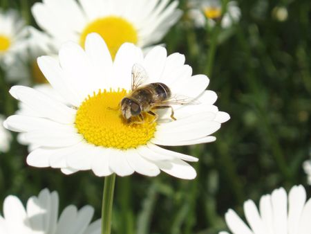Daisy and Bee photo
