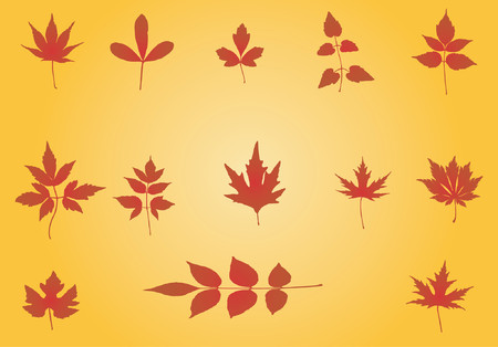 defoliation: Autumn Leaves background - vector illustration