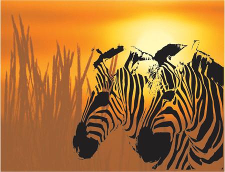 Zebra background - vector illustration Vector