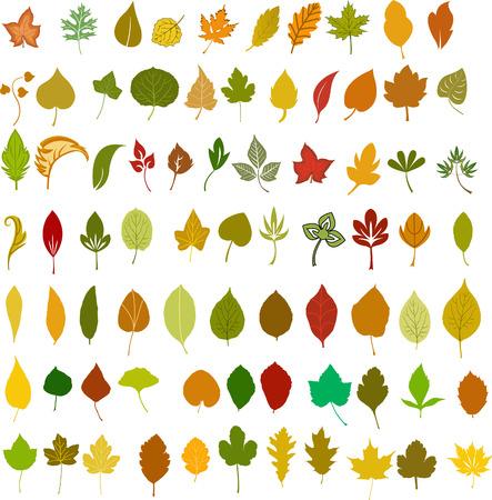 Leaves, vector