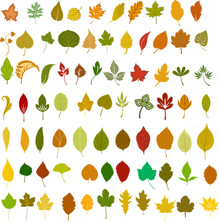 leaves vector: Leaves, vector
