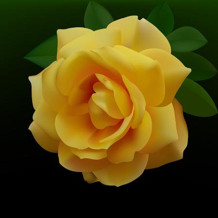 prickles: Rosa gialla  Vettoriali