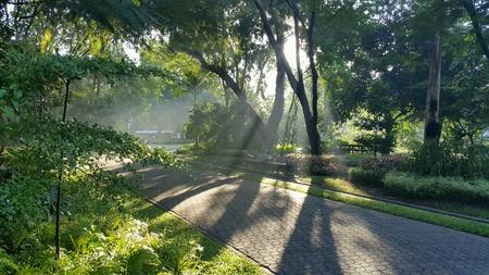 sirikit: Ray of morning light at  Sirikit Park