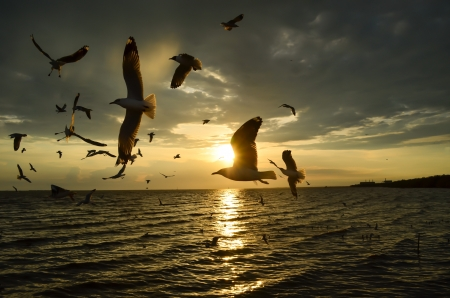 Silhouette of birds flying while sunset over the sea