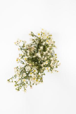 White cutter flower  on white background. Stock Photo